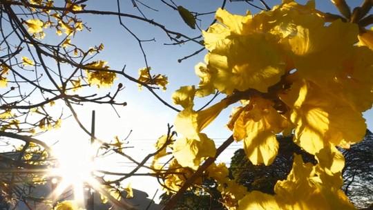 É primavera! Acompanhe o 'Meu Paraná' em um passeio pela natureza
