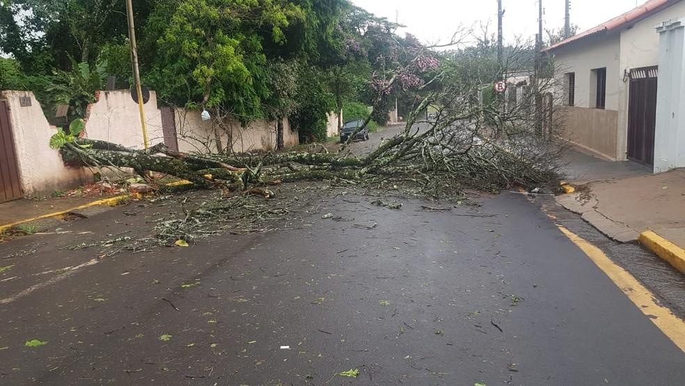 15 árvores caíram durante tempestade em Itatinga — Foto: Corpo de Bombeiros/Divulgação