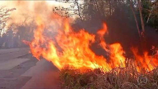 Cerrado registra mais focos de queimadas do que a Amazônia nos primeiros dias de setembro