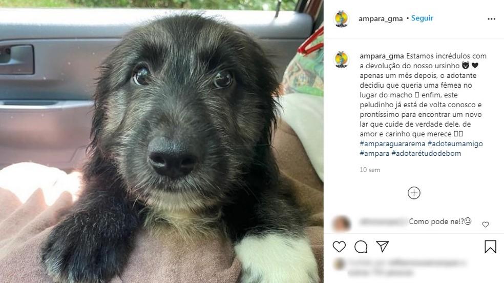 Assis chegou a ser devolvido para a ONG em que vivia, em Guararema, antes de ser adotado pelo CAPS — Foto: Reprodução/Instagram
