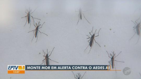 Região tem dez cidades em alerta para dengue, zika e chikungunya, afirma levantamento