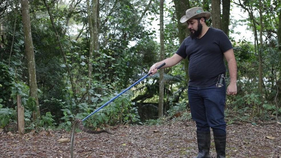 Pesquisadores analisaram tamanho das cobras, indo ao parque 4 vezes por mês  — Foto: Leticia Monastero Delphino/Divulgação/BBC