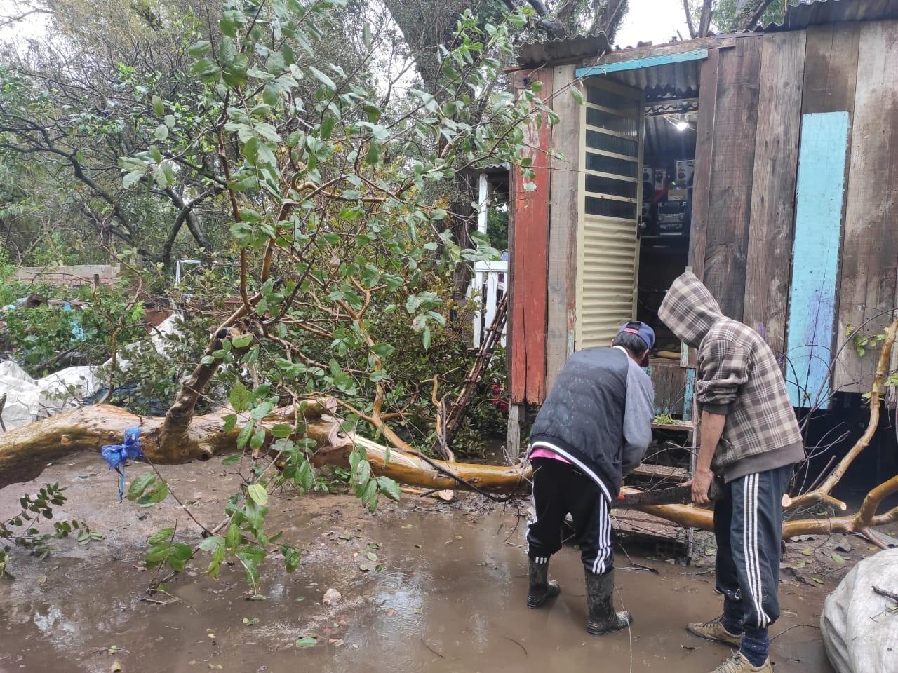 Chuva e vento forte destelham casas e derrubam árvores em Santa Maria
