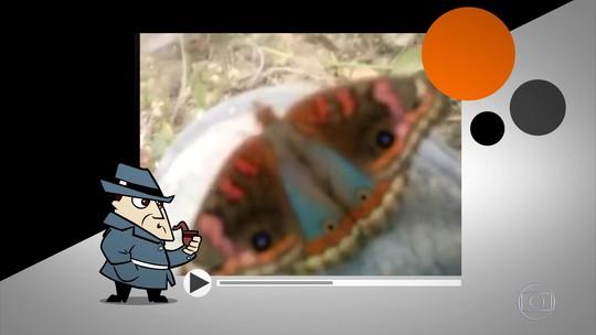 Detetive Virtual investiga borboleta com imagem de Nossa Senhora