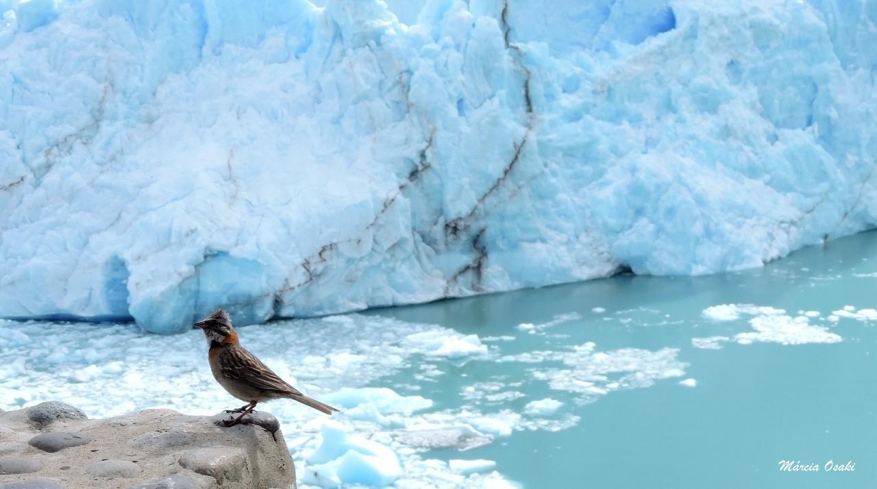 Como as aves lidam com o frio?