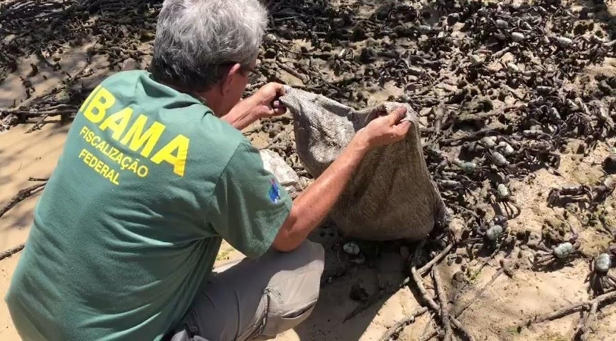 Ibama apreende cerca de 3 mil caranguejos sem declaração de estoque