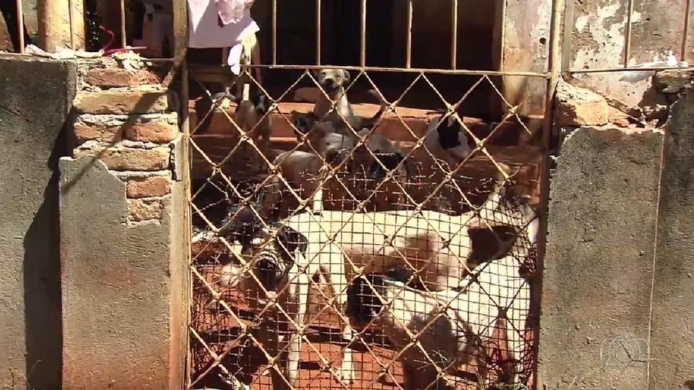 Cães foram encontrados com sinais de maus-tratos (Foto: TV Anhanguera/Reprodução)
