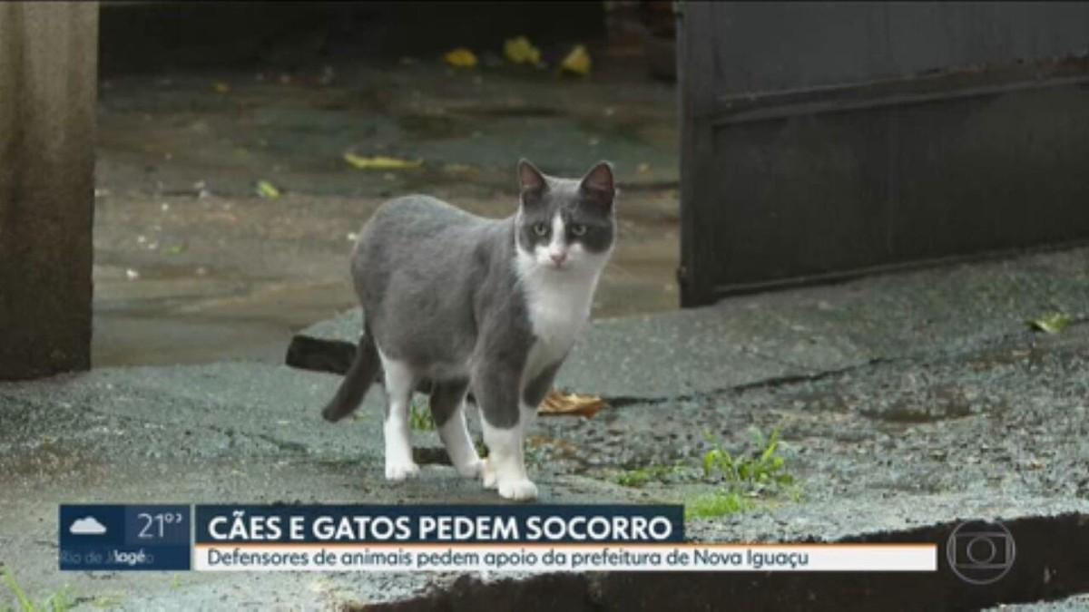 Protetoras denunciam aumento do abandono de cães e gatos em Nova Iguaçu e cobram apoio da prefeitura