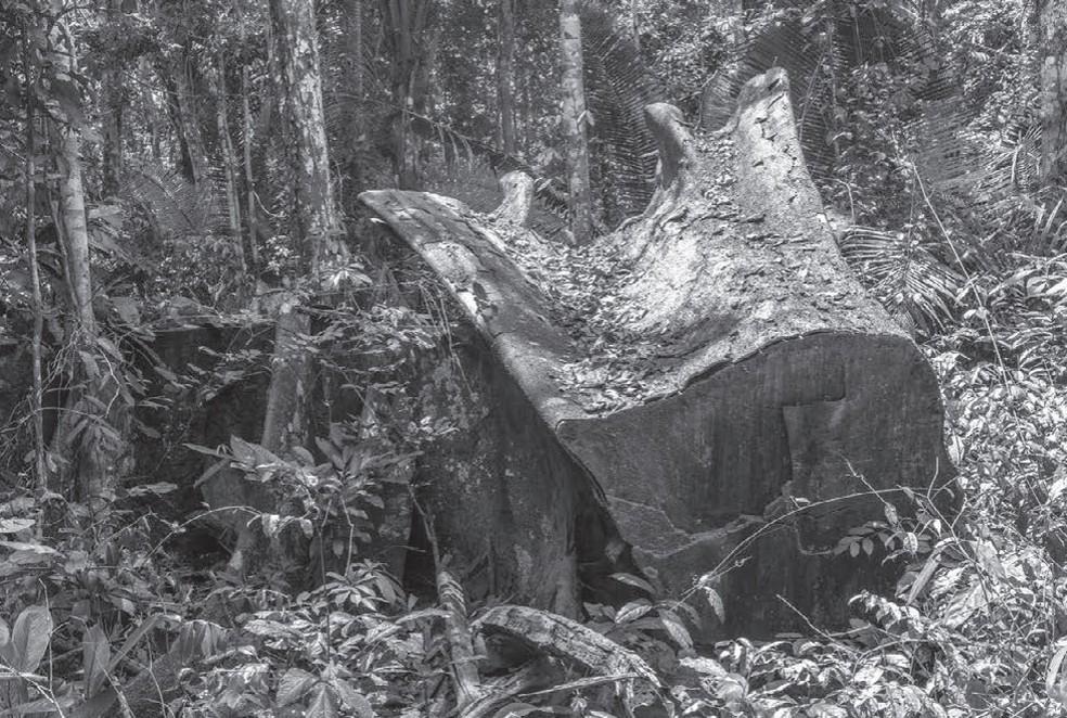 Mato Grosso registrou 8 casos de violência contra o patrimônio em terras indígenas — Foto: Rogério Assis/Cimi/Greenpeace