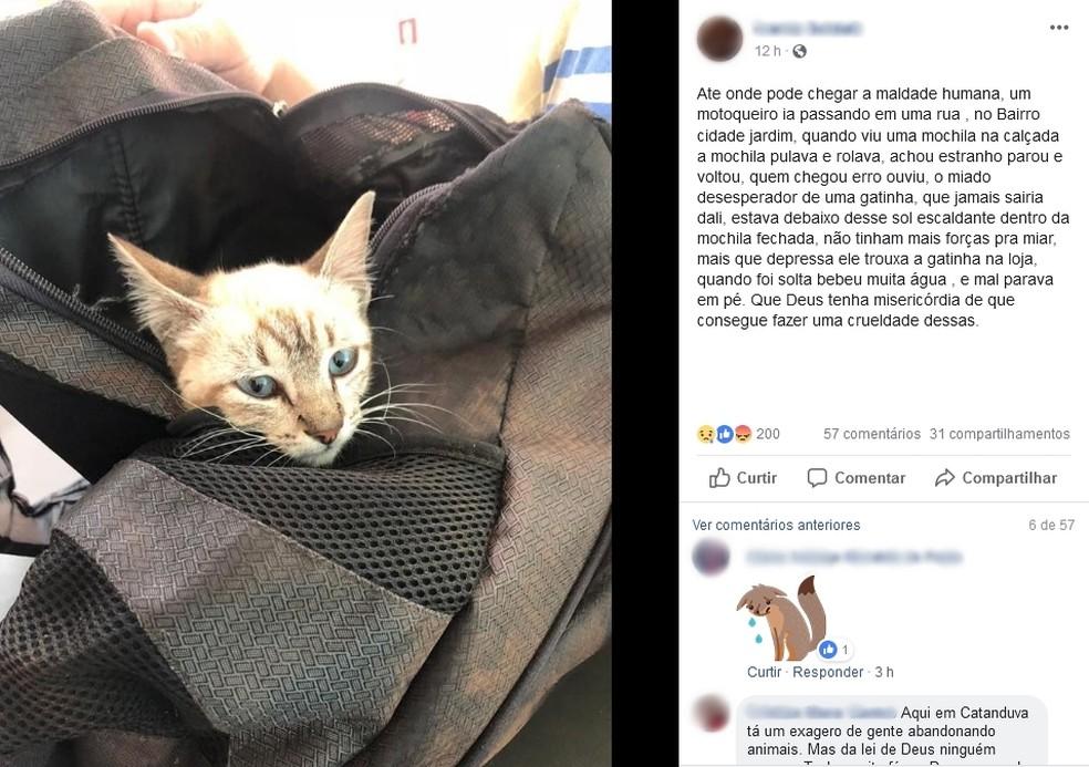 Mulher publica nas redes sociais sobre gata que foi abandonada — Foto: Reprodução Facebook