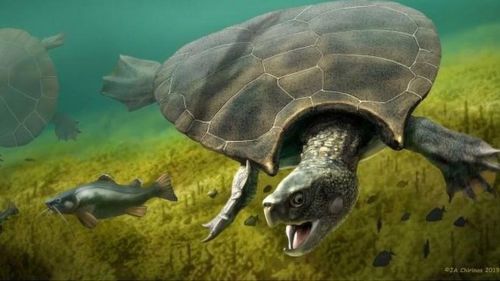 A espécie Stupendemys geographicus tinha aproximadamente o tamanho de um carro — Foto: PA MEDIA/BBC