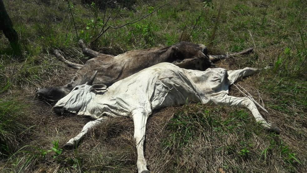 Animais morreram de fome e sede, segundo a polícia   Foto: PMA/Divulgação