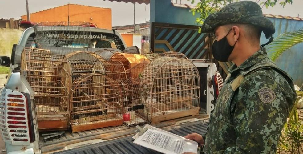 Policiais Militares Ambientais apreenderam aves silvestres mantidas ilegalmente em cativeiro nesta terça0feira (14) — Foto: PM Ambiental