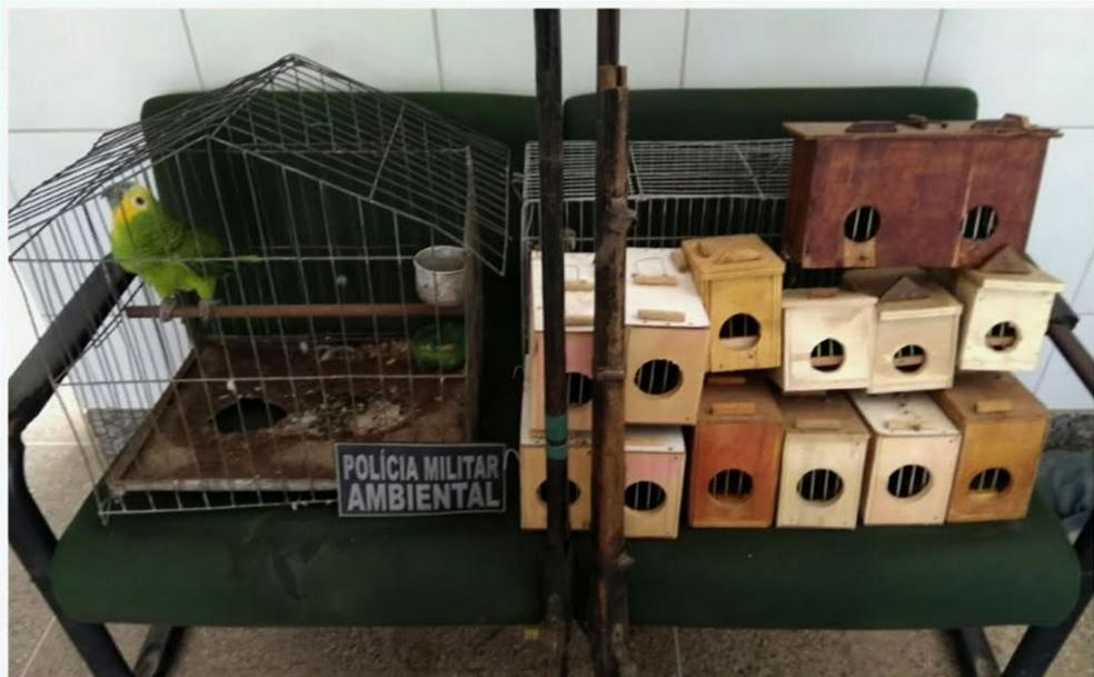 -  Foram apreendidos papagaios, periquitos e outros pássaros. Três homens foram presos.  Foto: Reprodução/TV Verdes Mares