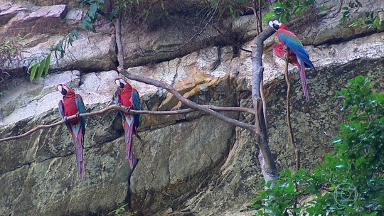 Região da Serra do Roncador abriga uma enorme variedade de animais