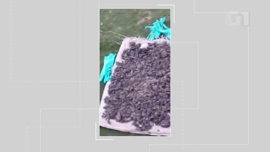 VÍDEO: Manchas de óleo atingem praia de Nova Viçosa