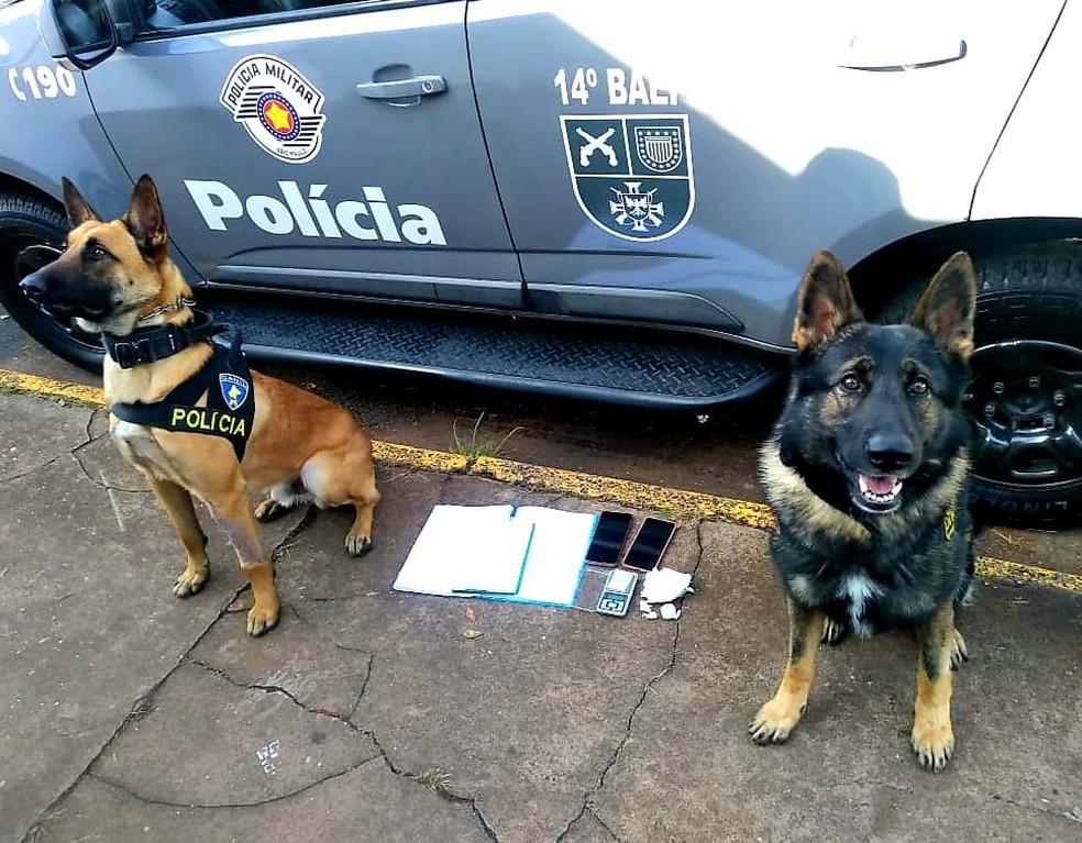 """Cães farejadores encontraram drogas em apartamento de casal durante """"Operação Narco"""" em Botucatu (SP) — Foto: Polícia Civil/ Divulgação"""