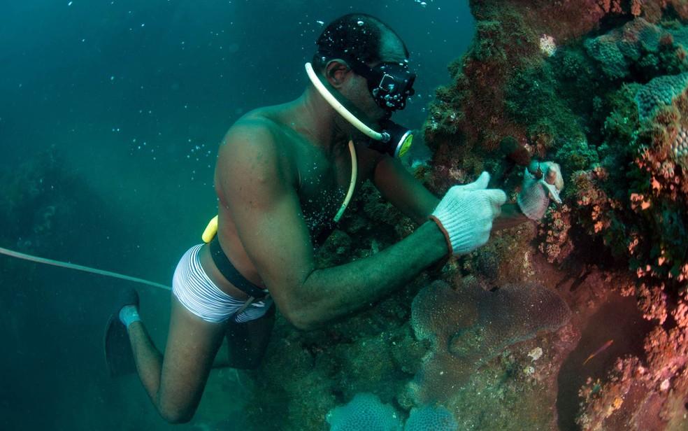 Mergulhadores da ONG Pró Mar fazem a retirada de colônias do coral-sol, espécie invasora que se alastra na Baía de Todos os Santos, em Salvador. O trabalho foi realizado na região de recifes conhecida como Cascos — Foto: Lúcio Távora/Agência A Tarde/Futura Press