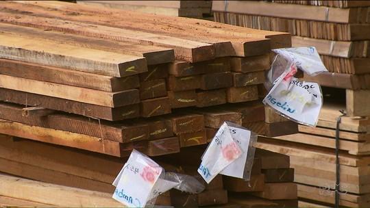 Ibama apreende, em empresa de Pinhais, madeira extraída ilegalmente da Floresta Amazônica