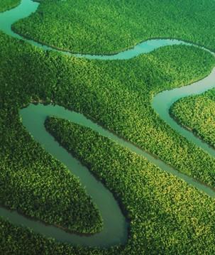 O papel das florestas protegidas no combate às mudanças climáticas