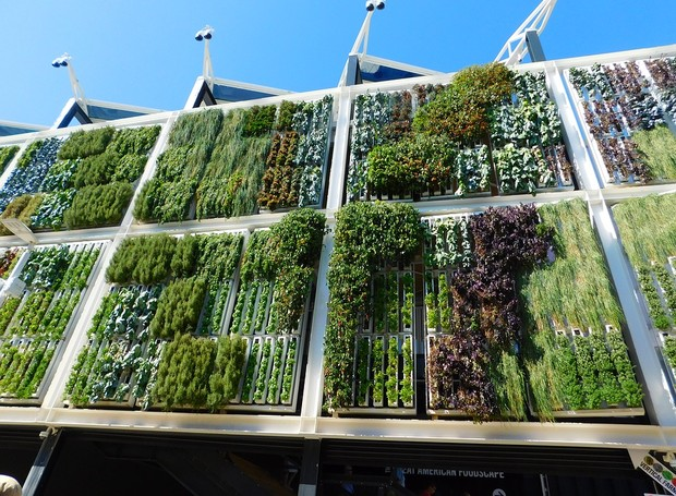 Jardim vertical também é um termo popular no Pinterest (Foto: Pixabay)