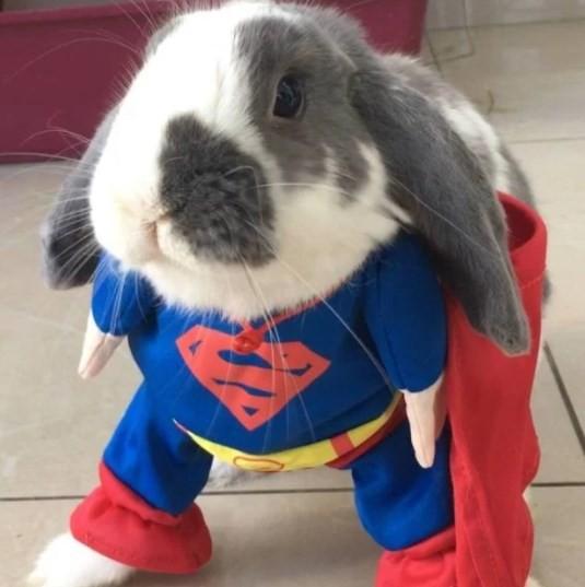 Bini de Super-Homem