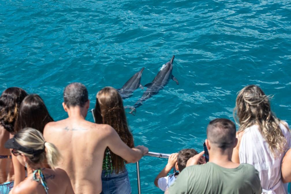 Turistas veem golfinhos durante passeio de barco em Fernando de Noronha — Foto: Fábio Tito/G1