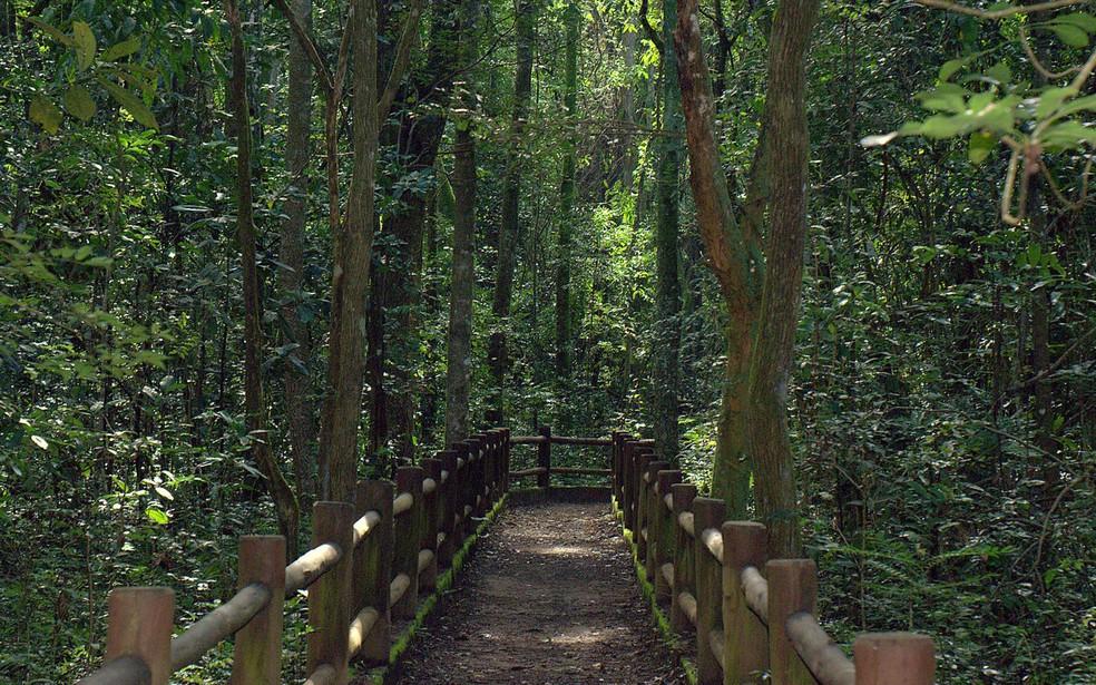 Trilha do Parque Nacional de Brasília; em imagem de arquivo — Foto: Acervo ICMBio