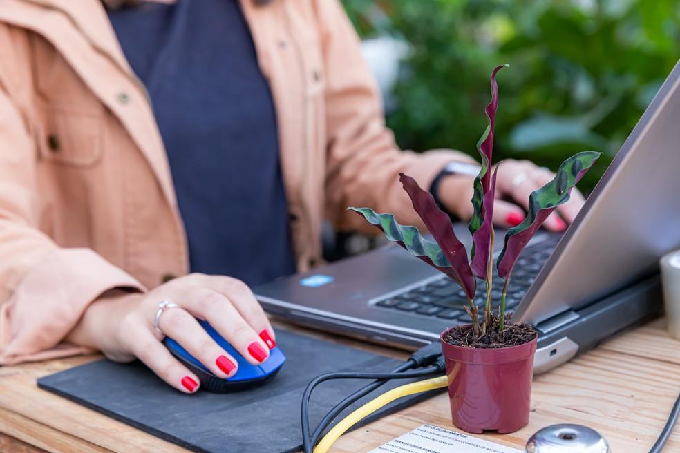 Mulher em escritório — Foto: Império dos Vasos e Flora