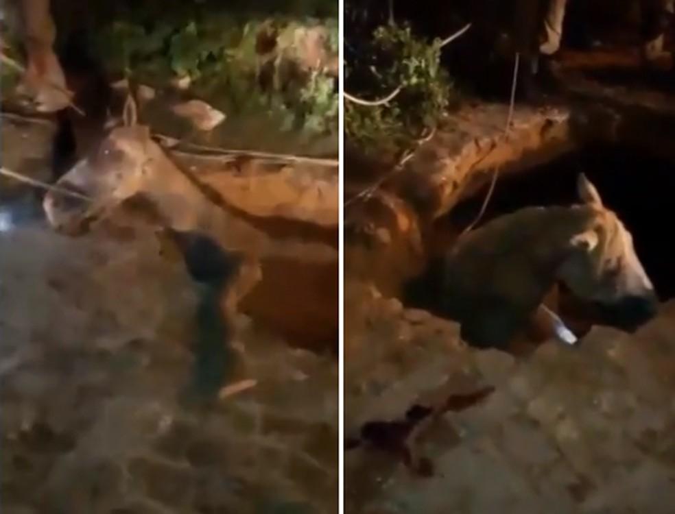 Cavalo foi resgatado após quatro horas de trabalho (Foto: Divulgação/Associação de Moradores do Bairro Santa Fé)