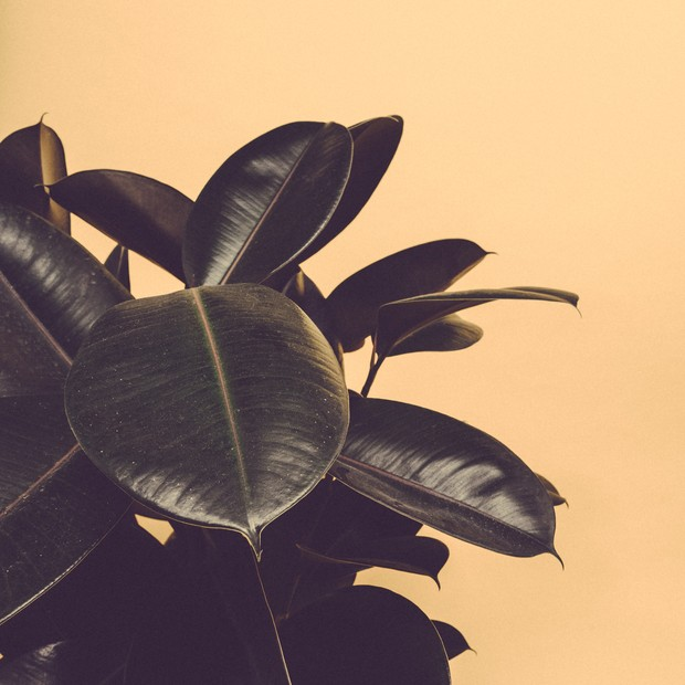 Plantas (Foto: Scott Webb/Unsplash)
