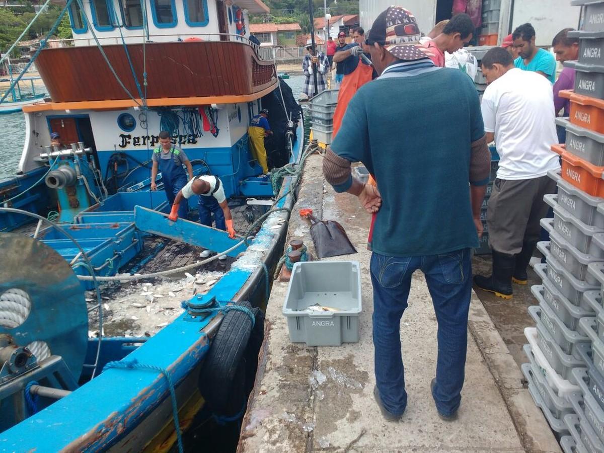 Polícia Ambiental apreende três toneladas de peixe em Ilhabela