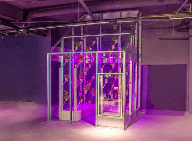 As cores dos LEDs na parte de dentro ajudam as plantas a se desenvolverem mais rápido (Foto: Deezen/ Reprodução)