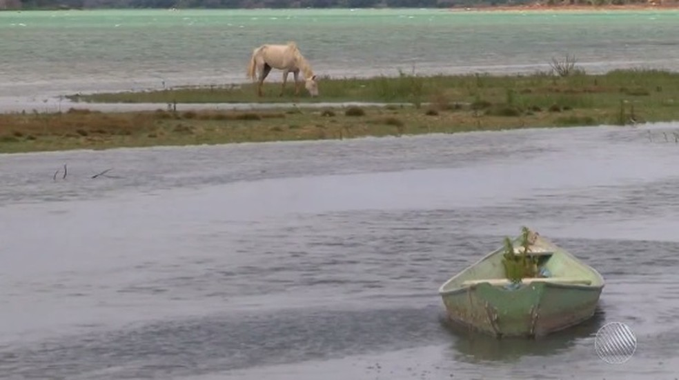 Local onde cavalo bebe água era considerado navegável antes da seca (Foto: Reprodução/ TV São Francisco)