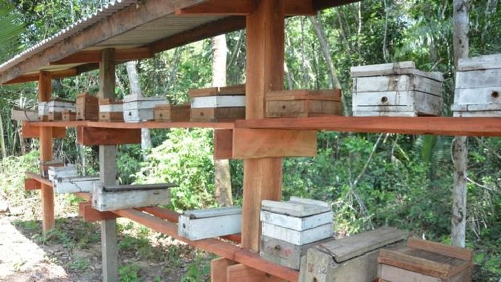 Colmeias em produção em comunidade da Reserva Extrativista Tapajós Arapiuns — Foto: Projeto Saúde & Alegria