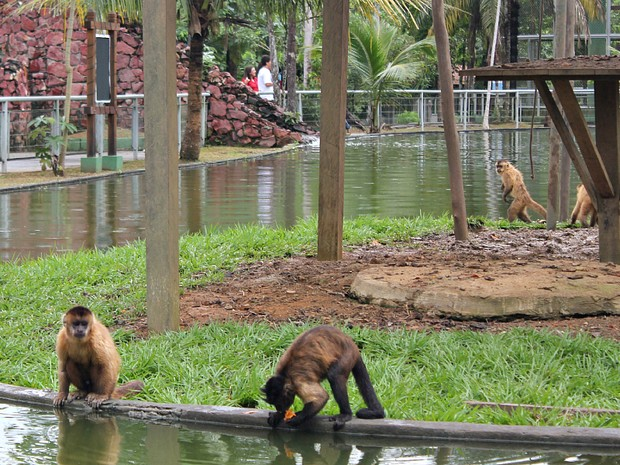 Ilha dos macacos no Zoológico do CIGS (Foto: Tiago Melo/G1 AM)