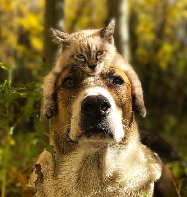 22781ff5d9 Guia  prepare a casa para a chegada do animal de estimação - Casa e ...