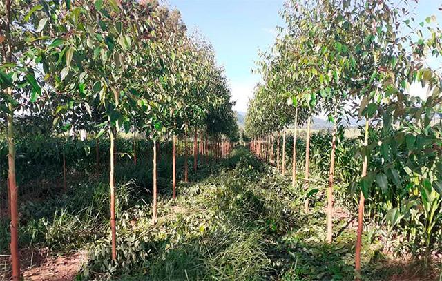 Zona da Mata tem 60 mil mudas plantadas em ação de reflorestamento do Projeto Conexão Mata Atlântica