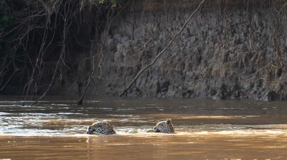 Mãe e filho atravessa rio com cobra na boca — Foto: Arjan Jongeneel/Arquivo Pessoal