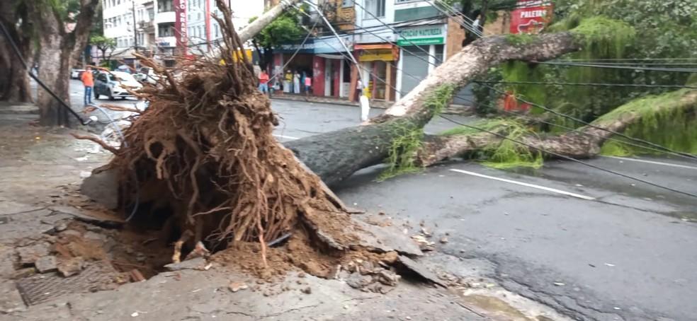 Árvore caiu sobre fios, derrubou postes e bloqueou rua Forte de São Pedro, em Salvador  — Foto: Cid Vaz/TV Bahia