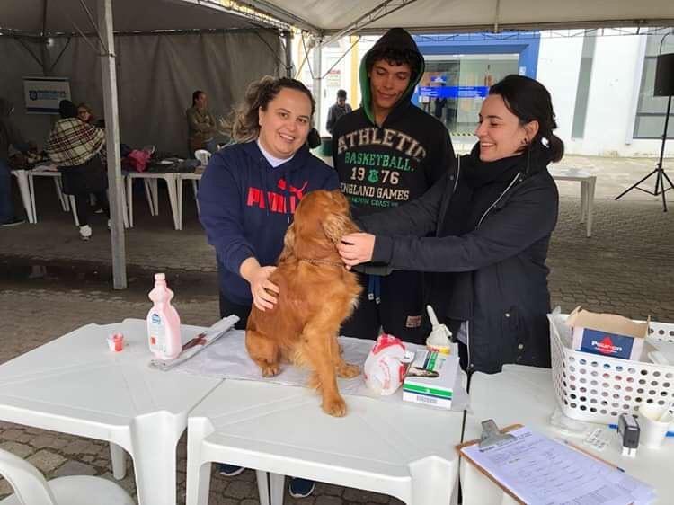 Cachorros de pessoas em situação de rua de Florianópolis terão atendimento veterinário gratuito - Notícias - Plantão Diário