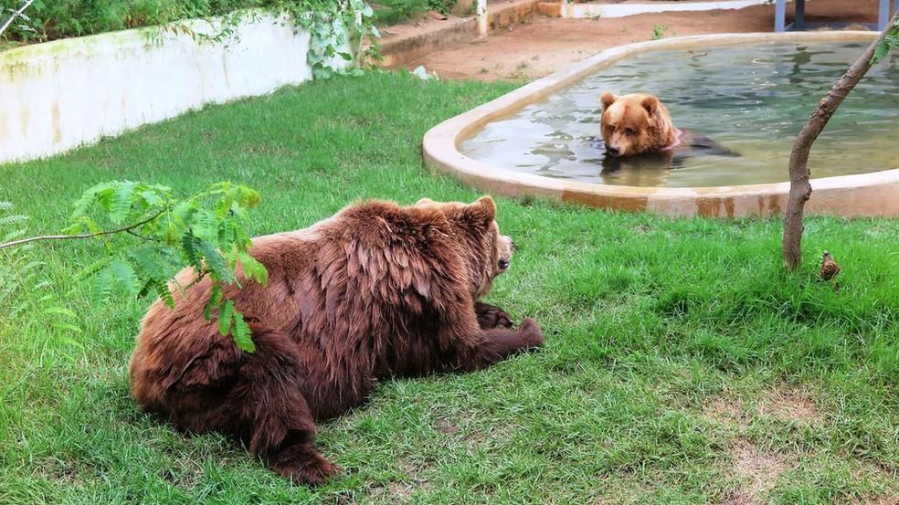 Ursos Dimas e Kátia no Zoológico de Canindé — Foto: Alex Pimentel/SVM