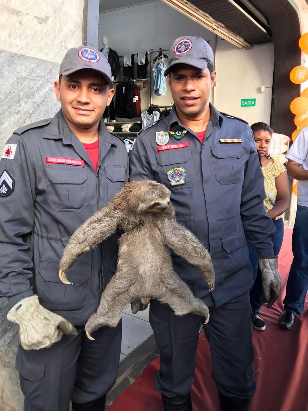 Animal vive em uma praça, no Centro da cidade (Foto: Corpo de Bombeiros Militar/Divulgação)
