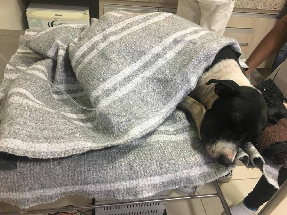 Xuna está há quatro dias internada numa clínica veterinária em Araguaína (Foto: Murilo de Carvalho/Divulgação)