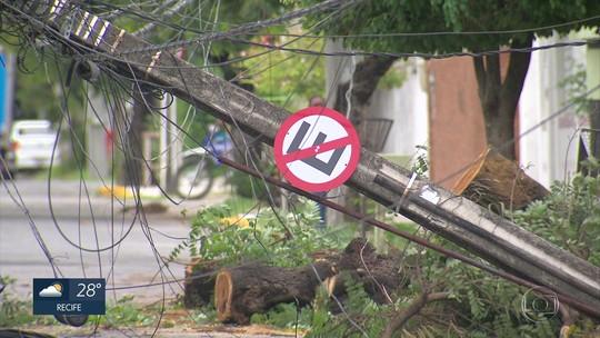 Árvore cai e derruba poste na Zona Norte do Recife