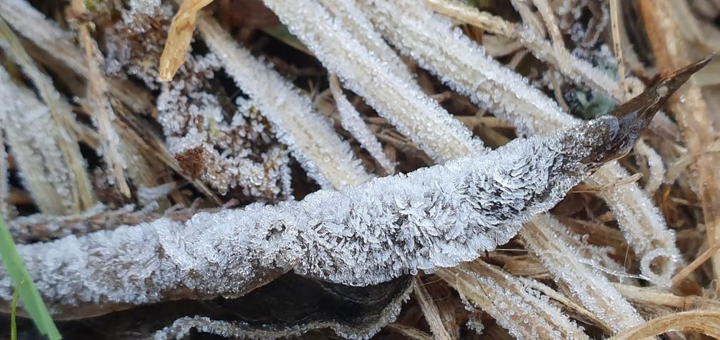 Gelo cobriu vegetação em São Joaquim — Foto: Mycchel Legnaghi/Divulgação