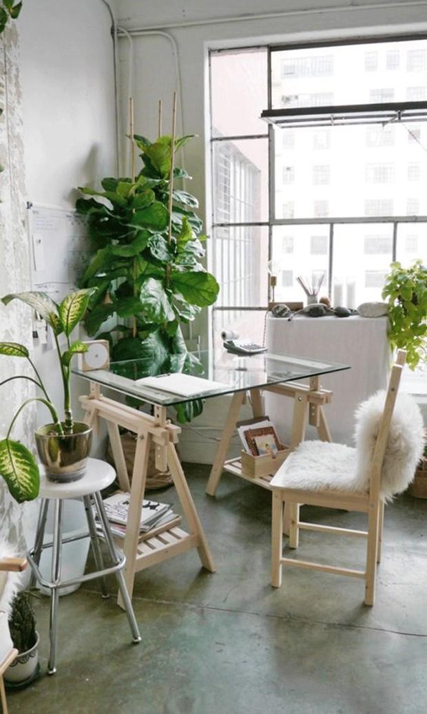 Décor do dia: home office bem iluminado e decorado com plantas   (Foto: Reprodução)