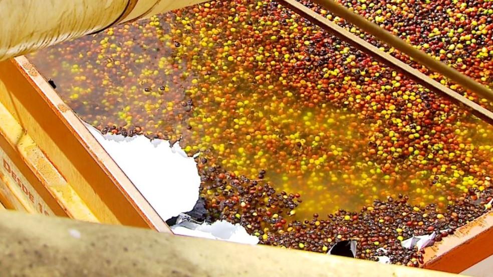 No lavador é feita a seleção do café em Caconde (Foto: Reprodução/EPTV)