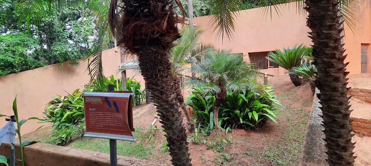 MP se manifesta a favor de transferência dos chimpanzés do zoo de Sorocaba