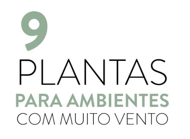 9 plantas para ambientes com muito vento (Foto: Casa e Jardim)
